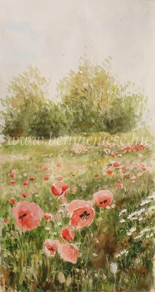 Pipacsos rét - akvarell kép